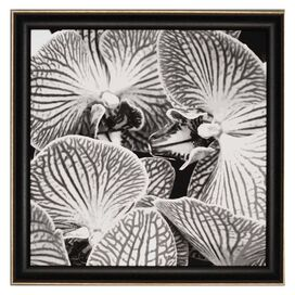 Orchid Framed Wall Art