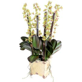 Faux Cattleya Orchid Arrangement