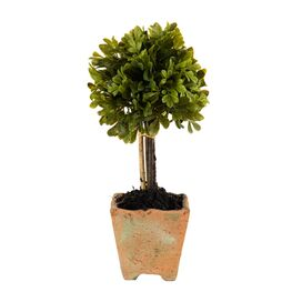 Faux Boxwood Topiary I