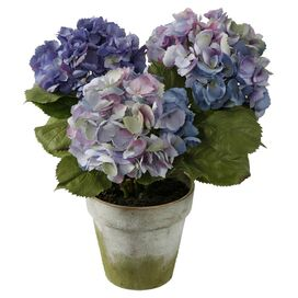 Potted Hydrangea - Set of 3