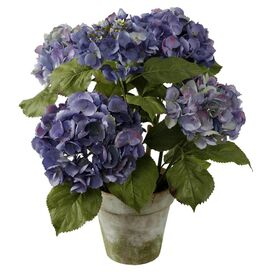 Potted Hydrangea - Set of 4