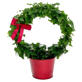 Ivy Wreath & Tin
