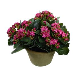 New Growth Designs Faux Kalanchoe Arrangement I