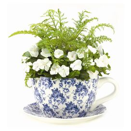 Delight Teacup Planter