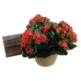 New Growth Designs Faux Kalanchoe Arrangement II