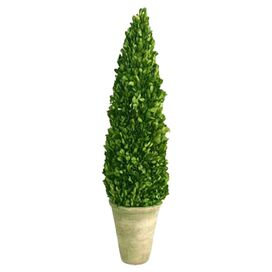 Preserved Boxwood Cone Topiary III