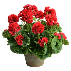 New Growth Designs Faux Potted Geranium