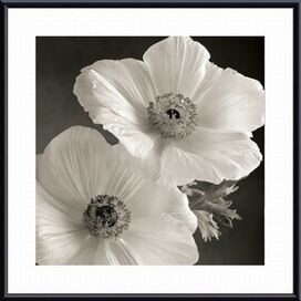 Poppy Study I Wall Art
