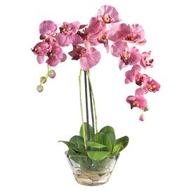 Faux Potted Phalaenopsis Orchid I in Pink