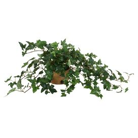New Growth Designs Faux English Ivy
