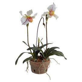 New Growth Designs Faux Lady's Slipper Orchid Arrangement