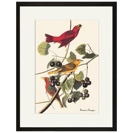 Summer Tanager Framed Print