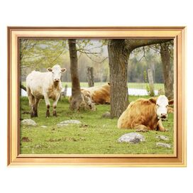 Cows in a Pasture Framed Print - Art.com