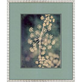 Queen Anne's Lace I Framed Print