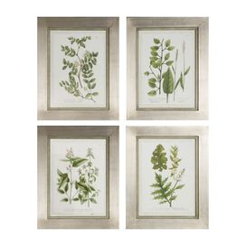 4 Piece Botanical Collection Framed Print Set