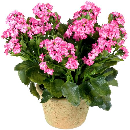 New Growth Designs Faux Kalanchoe Arrangement