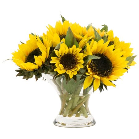 sunflower inc Sunopta specializes in long shelf life, high oleic sunflower kernel and large inshell sunflowers.