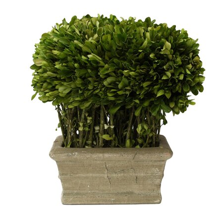 Preserved Boxwood Loaf Topiary II