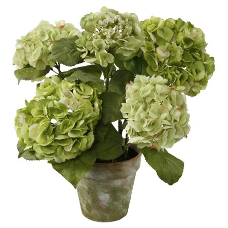 Faux florals wreaths joss and main - Care potted hydrangea ...