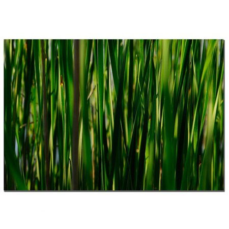 Prairie Grass II Canvas Print