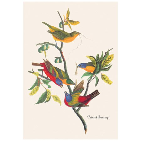 Painted Bunting Canvas Print by John Audubon