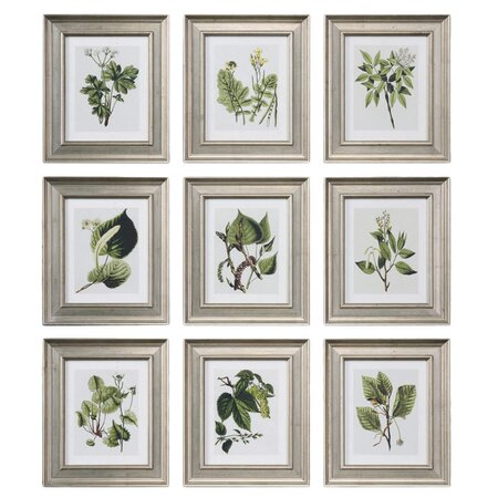 9 Piece Botanical Study Framed Print Set