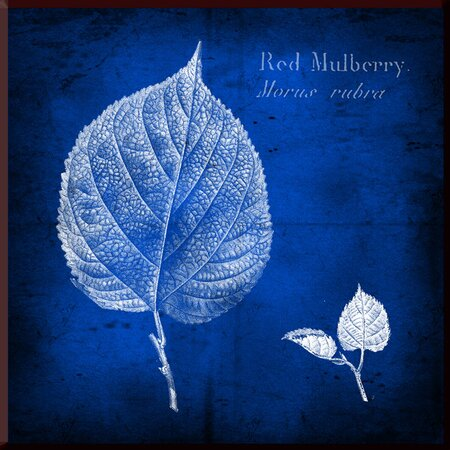 Red Mulberry Wall Art